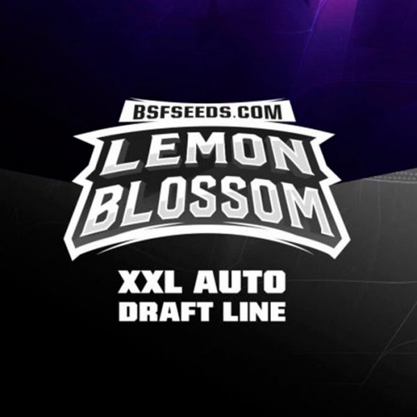 Auto Lemon Blossom XXL BSF - (x2)