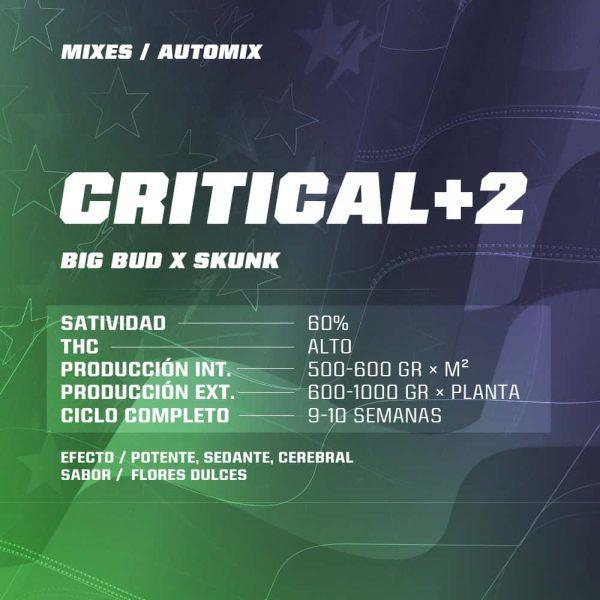 Dream Team Feminizada Mix BSF - (x12)