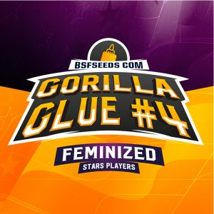 Gorilla Glue Feminizada BSF – (x4)