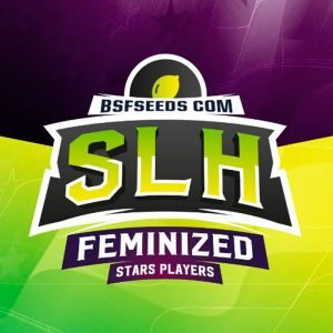 Super Lemon Haze Feminizada BSF - (x4)