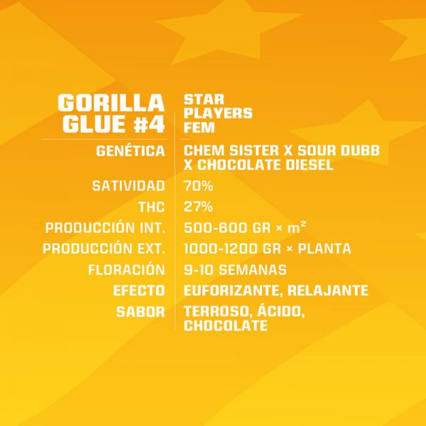 Gorilla Glue Feminizada BSF - (x4)