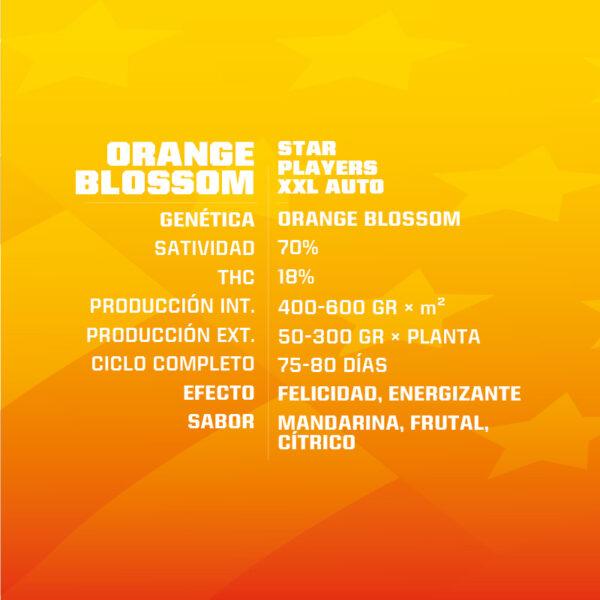 Auto Orange Blossom XXL BSF - (x4)