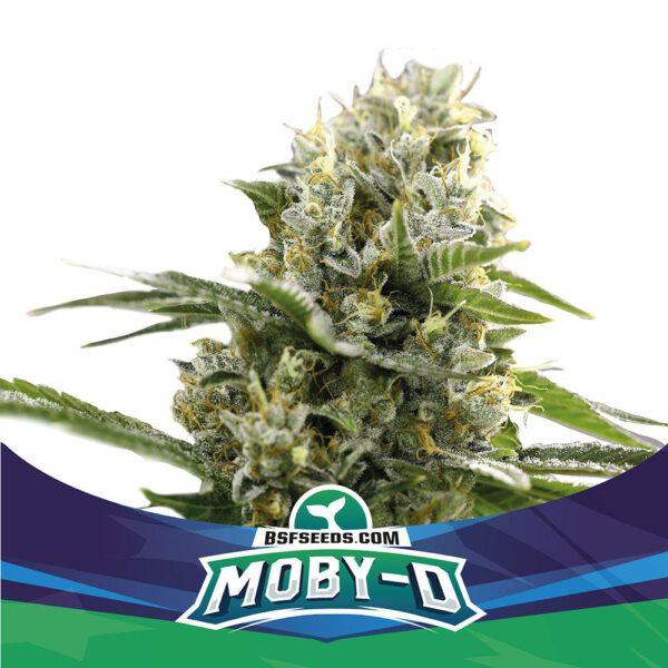 Auto Moby D XXL BSF - (x4)