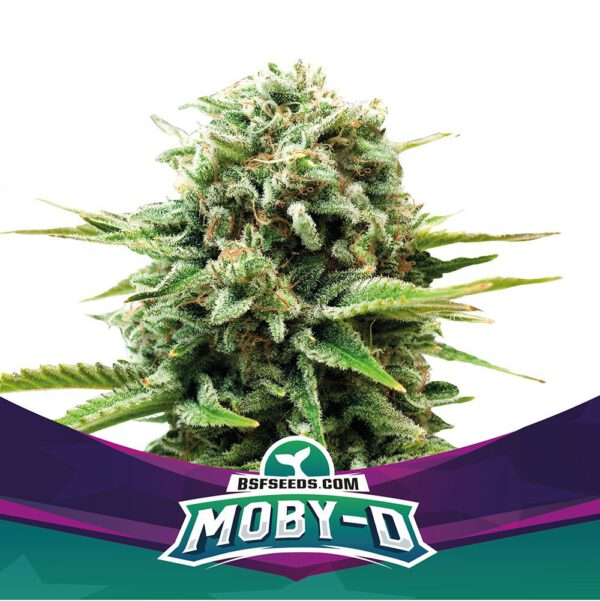 Moby D Feminizada BSF - (x2)