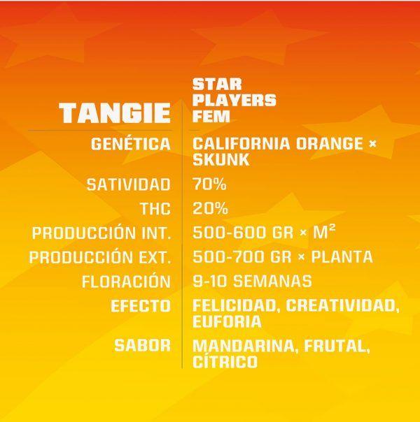 Tangie Feminizada BSF - (x4)